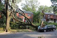 Big tree toppled down near a car and some houses